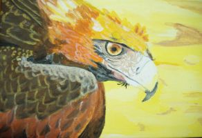 Wedge Tail Eagle by Imva