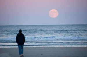 Pale Moon Rising, Stop and Stare In Wonder 2 by Miss-Tbones