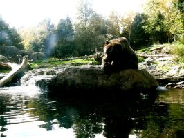 Bear lounging on his rock by MegaPIG1o1