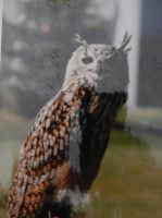 Great Horned Owl by Sanluris