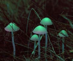 magical mushrooms by electriclover