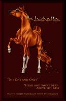 Ibn Inshalla - Stud Page by Ehetere