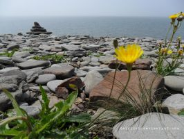 Dandilions On The Sea Shore by Zinantis