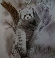 Red Panda Sketch by mrs-matsuyama