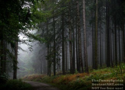 The foggy forest by TheFunnySpider