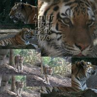 Amur Tiger Pack - 2 by Seductive-Stock