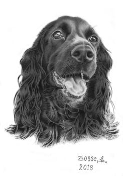 Cocker Spaniel 2 by Torsk1