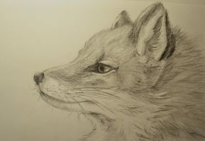 Fox Sketch by Zarlath