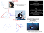 Orca Killer Whale Tutorial by WeisseEdelweiss