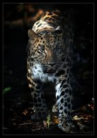 The Spots of a Leopard. by DuvallGear