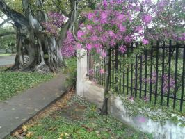 . IRON FENCE AND TREES. Gables Florida. BY Henry V by HenryValdROCKS