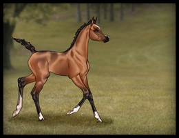 A'noud - Foal Reference by Ehetere