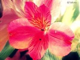 pink flower by tailsxo