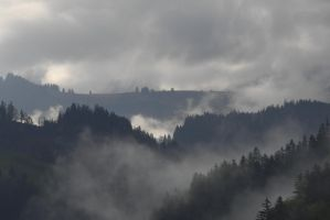 Fog in the forest 5 by MarcZingg