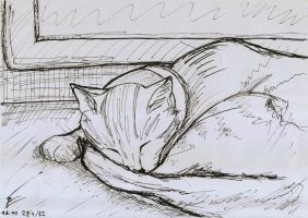 Sketch ink my cat on my desk by Draconica5