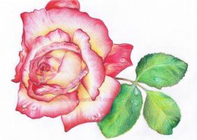 Rosa by Mathelt