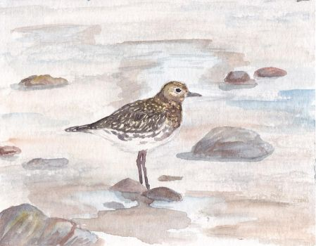 Golden Plover by crazy-fruit