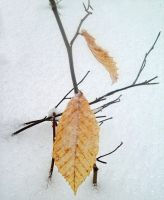 Leaves in the Snow by Kaito42