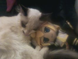 Len Likes Cats by AnyaBlood1632