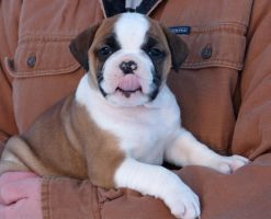 Annette by NobleBulldogges