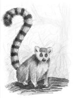 lemur by Sarippus