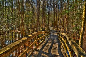Swamp Walkway by Blue-Eyed-Wolf