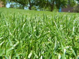 grass 3 by yellowicous-stock