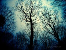 Dark Trees by Bouffe