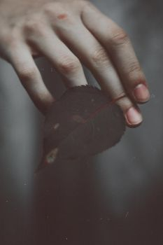 The leaf fell into the hands of dusk by NataliaDrepina