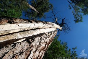 Split Wood by Tsitra360