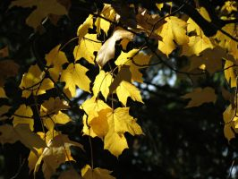 Glowing Leaves by Michies-Photographyy