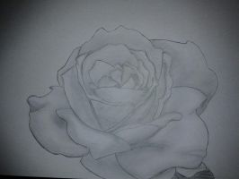 A drawing of a rose by Agi6