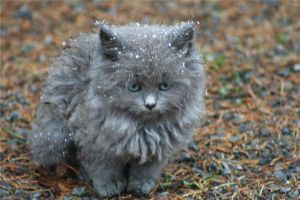 Kitten in the cold by kitsunewolf13