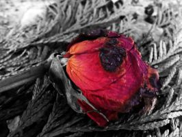Broken Rose. by coloredchemicalzombi