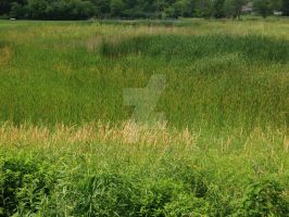 Illinois Marshlands by Snowflake20t