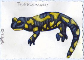 Feuersalamander 001 by Ka-Kind