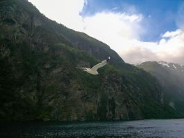 Flying seagull - Norway (11) by LorcanPL