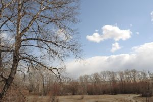 tree branches against the sky by Tumana-stock