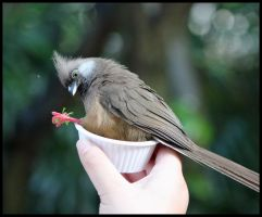 A Hungry Mousebird by mikewilson83