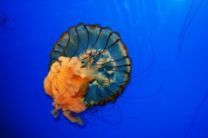 jellyfish 1 by iamme2234