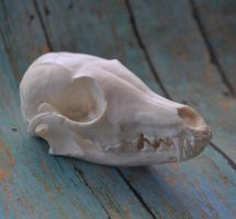 Hand Made Replica Gray Fox Skull by MorRokko