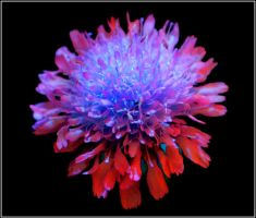 Unreal Bloom by JoInnovate