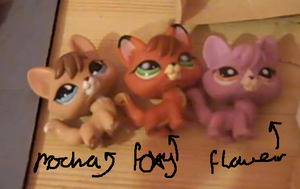 My Littlest Pet Shop Foxes~ by MiddyLPS