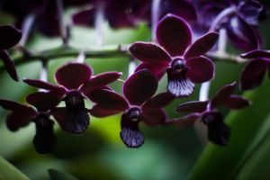 Orchid 05 by EmbryonicPith