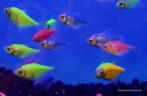 Stock - Glofish (Skirt Tetras) 8 by Pendlera
