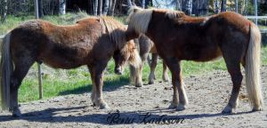 Horsyhorses talking by Renroth