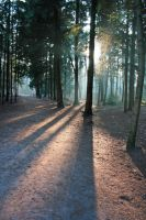 Forest light II by MontagneStock
