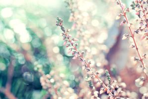 Calluna vulgaris by emshh