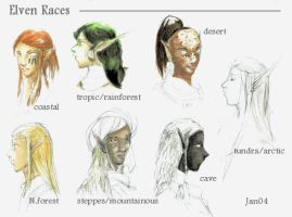 Elven Races by suprhppymgcprincesss