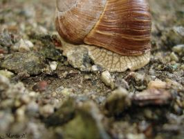 Snail by MarcusBecklof